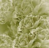 Bello fondo bianco verde d'annata floreale Composizione nel fiore Mazzo dei fiori dalle rose verde chiaro Primo piano Fotografia Stock