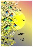 Bello fondo con il sole, gli uccelli e la siluetta dell'albero Fotografie Stock Libere da Diritti