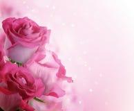 Bello fondo con le rose dei fiori Immagine Stock