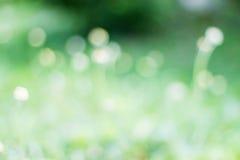 Bello fondo confuso del fiore dell'erba Immagini Stock