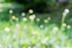 Bello fondo confuso del fiore dell'erba Fotografia Stock Libera da Diritti