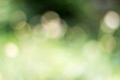 Bello fondo confuso del fiore dell'erba Fotografie Stock Libere da Diritti