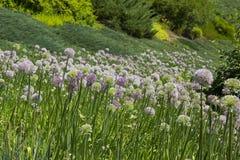 Bello fondo dei Wildflowers Fotografia Stock Libera da Diritti