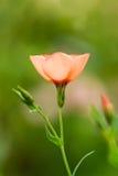 Bello fondo del fiore di estate umore di estate della molla Immagine Stock