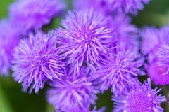 Bello fondo del fiore di estate umore di estate della molla Fotografia Stock Libera da Diritti