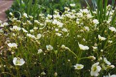 bello fondo di estate dei fiori delicati fantastici Fotografie Stock Libere da Diritti