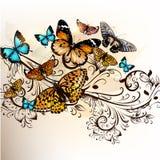 Bello fondo di vettore con le farfalle e l'ornamento Fotografia Stock