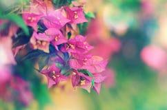 Bello fondo floreale con il fiore rosa Fotografie Stock