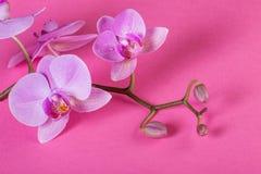 Bello fondo floreale del fondo… con i fiori variopinti Fotografia Stock