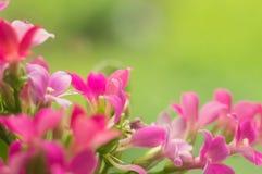 Bello fondo floreale per la cartolina d'auguri Immagine Stock Libera da Diritti