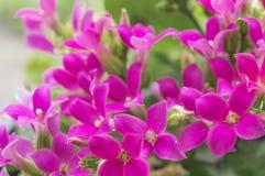 Bello fondo floreale per la cartolina d'auguri Fotografia Stock Libera da Diritti