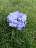 Bello fondo per i fiori degli smartphones immagine stock libera da diritti