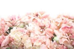 Bello fondo rosa del fiore fotografia stock libera da diritti