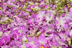 Bello fondo rosa dell'orchidea Immagine Stock