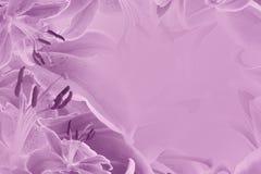 Bello fondo rosa floreale Composizione del fiore dei gigli dei fiori Immagini Stock