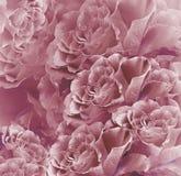 Bello fondo rosso floreale Composizione nel fiore Mazzo dei fiori dalle rose di rossi carmini Primo piano Fotografia Stock Libera da Diritti