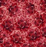 Bello fondo rosso floreale d'annata Composizione nel fiore Mazzo dei fiori dalle rose rosse Primo piano Fotografia Stock Libera da Diritti