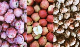 Bello fondo rosso scuro dell'impero e spartano di autunno delle mele e delle prugne Immagini Stock Libere da Diritti