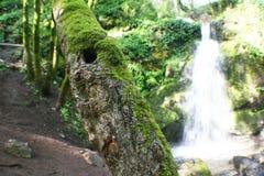 Bello fondo tropicale con alta qualità della cascata Immagine Stock