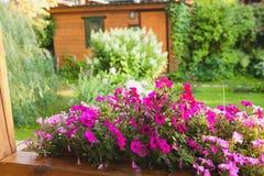 Bello frammento esteriore del giardino con i fiori Fotografia Stock