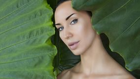 Bello fronte della donna con trucco nudo naturale su una prateria tropicale immagini stock