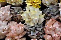 Bello fungo nel colore differente Fotografia Stock Libera da Diritti