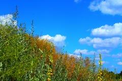 Bello galleggiante delle nuvole sopra l'erba fotografia stock