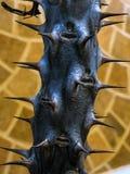 Bello gambo spinoso nero di una pianta immagini stock