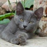 Bello gattino grigio nella via Fotografie Stock Libere da Diritti