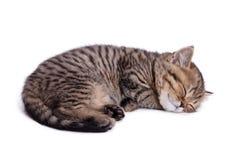 Bello gattino a strisce Fotografia Stock Libera da Diritti