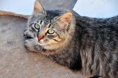Bello gatto Fotografie Stock