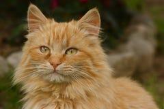 Bello gatto Immagini Stock
