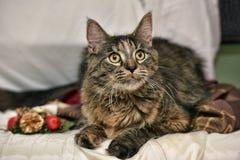 Bello gatto Immagine Stock