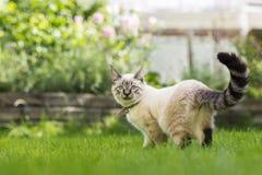 Bello gatto Fotografia Stock