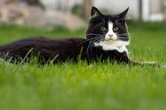 Bello gatto Immagini Stock Libere da Diritti