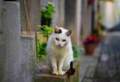 Bello gatto bianco fotografia stock