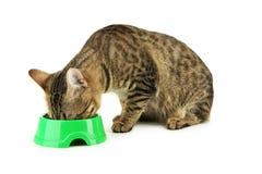 Bello gatto che mangia, isolato su bianco Fotografia Stock Libera da Diritti
