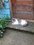 Bello gatto che riposa all'aperto di estate fotografia stock libera da diritti