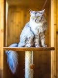 Bello gatto che si siede su un davanzale e su uno sguardo Immagini Stock