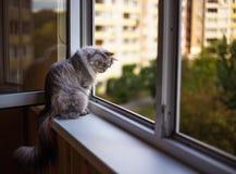 Bello gatto che si siede su un davanzale e su uno sguardo Immagini Stock Libere da Diritti