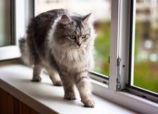 Bello gatto che si siede su un davanzale e su uno sguardo Immagine Stock