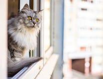 Bello gatto che si siede su un davanzale e su uno sguardo Fotografia Stock Libera da Diritti