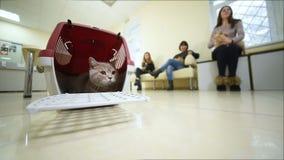Bello gatto che si siede in un canestro animale contro il contesto di una clinica veterinaria video d archivio