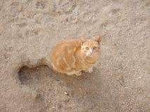 Bello gatto dello zenzero Fotografia Stock