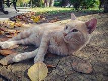 Bello gatto dello zenzero senza tetto fotografie stock libere da diritti