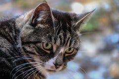 Bello gatto di tabby Fotografia Stock Libera da Diritti