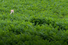 Bello gatto in erba Fotografie Stock Libere da Diritti