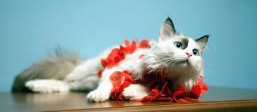 bello gatto, gatto favorito,   Fotografia Stock