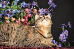 Bello gatto marrone fra i fiori Fotografia Stock Libera da Diritti