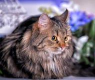 Bello gatto marrone lanuginoso Fotografie Stock Libere da Diritti